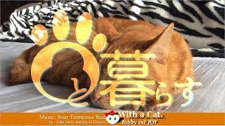 Download 三毛猫にできるならボクにだってできるの日 - とら猫 JOY (ΦωΦ) Video