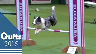 Download Agility - Championship Final | Crufts 2016 Video