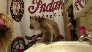 Download My Pampered Monkey Video