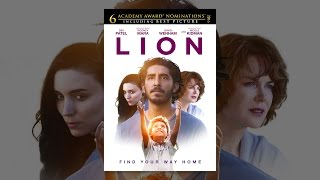 Download Lion Video