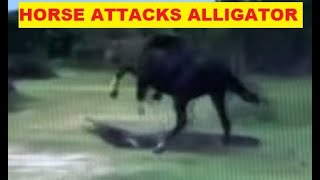 Download Why Would A Horse Attack An Alligator For Apparently No Reason - Horse Herd Behavior Explained Video