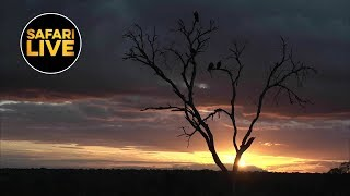 Download safariLIVE - Sunset Safari - April 23, 2019- Part 2 Video