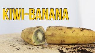 Download Cómo hacer crecer un kiwi dentro de una banana - BANIWI Video