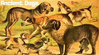 Download 10 Most Ancient Dog Breeds On Earth (P#3) Video