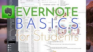 Download How to Use Evernote | Basics for Students [Lecturio] Video