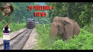 Download Asim Trying To Stop The Train To Save Elephant. Video
