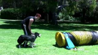 Download Dog Agility - Training your Dog to Walk through Tunnels Video