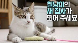 Download 고양이 칠냥이의 새 집사 되어 주세요 Video