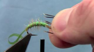 Download Tying with Hans- Hydropsyche Caddis Larvae Video