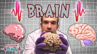 Download Science for kids   Brilliant Brains   The Nervous System   Experiments for kids   Operation Ouch Video