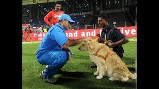 Download MS DHONI'S RETIREMENT FORCES ANIMALS TO COME ON FIELD Video