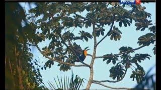 Download Пульс атлантического леса Video