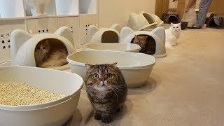 Download 일곱 고양이와 함께 산다는 것 Video