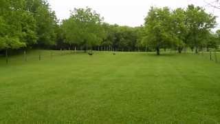 Download Newly Retired Greyhound ~ Minnie MOUTH @ Noll's Ark Farm, Oneida, NY Video
