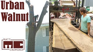 Download Urban Walnut Tree Removal and Slabbing Video