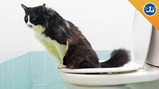 Download Why You Should NOT Toilet Train Your Cat Video