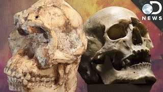 Download The Fight Over This 3.7 Million Year Old Human Ancestor Video