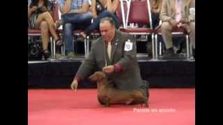 Download ″Perros en acción″ Puerto Rico 2012 Video