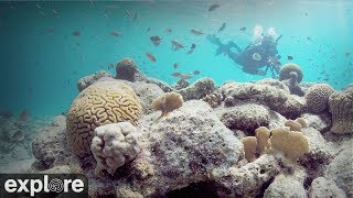 Download Bonaire Underwater Coral Cam powered by EXPLORE.org Video