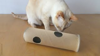 Download How to Make a Puzzle Tube Toy for your Cat Video