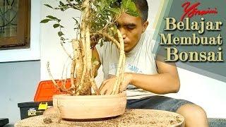 Download Re-potting Bahan Bonsai Serut (Streblus Asper) Video