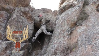 Download ARCHERY IBEX hunt in New Mexico! Unforgiving CLIFFS and CACTUS! Video
