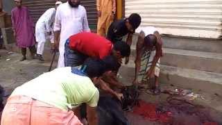 Download Qurbani (Eid ul Adha in Bangladesh) Video