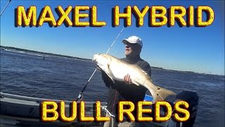 Download MAXEL MICRO JIGGING REEL TESTED Video