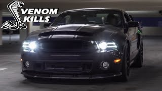 Download The BADDEST GT500 Super Snake You'll Ever See! READY TO HUNT Video