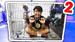 Download Escape The Dog Cage 2! Video