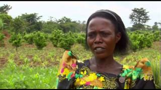 Download The Gender Dimensions of Food and Nutrition Security in the context of Climate Change Video