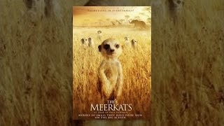 Download The Meerkats Video