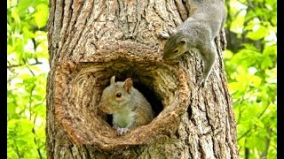 Download Cats Go Bonkers for this Squirrel Playing Peek A Boo Video Video