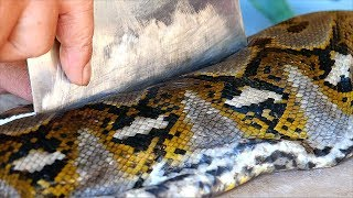 Download Indonesian Food - GIANT PYTHON Snake Curry Manado Indonesia Video