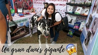 Download Elyana se va 😭+ Feria de mascotas en Guayaquil - Vlog 24 Sep 2017 Video