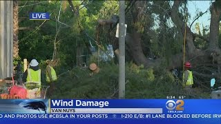 Download Thousands Still Without Power After LA Pummeled By Wind Video