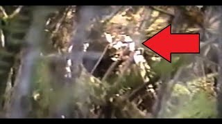 Download VERY IMPRESSIVE BIGFOOT FOOTAGE!! - Man Cries In FEAR While Video Taping ″Real Sasquatch Sighting″ Video