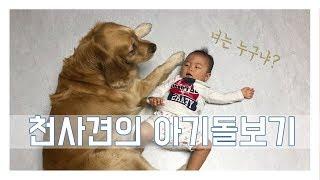 Download 힐링영상] 아기와개/ 천사견 골든리트리버가 8개월 아기를 만났어요 :) Video