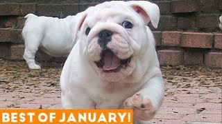Download Funniest Pet Reactions & Bloopers of January 2018   Funny Pet Videos Video