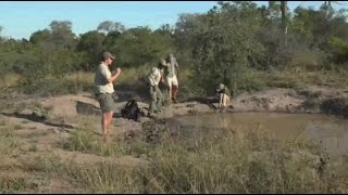 Download Safari Live : Jamie, James, Tristan and Herbie build clay animals May 19, 2017 Video