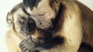 Download Moral behavior in animals | Frans de Waal Video