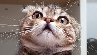 Download 아기 고양이 혼빼서 발톱 깎는 법 Video