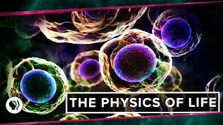 Download The Physics of Life (ft. It's Okay to be Smart & PBS Eons!) | Space Time Video