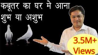 Download kabootar ka ghar me aana shubh ya ashubh घर में अगर कबूतर का घोंसला है तो क्या हो सकता है Video
