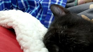 Download Kitten close up 2018-07-04 Video