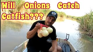 Download Fishing For Catfish With Onions?? Video
