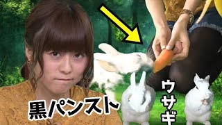 Download 水瀬いのりがウサギと遊ぶだけ動画wwwいのりんから逃げるうさぎww可愛すぎww Video