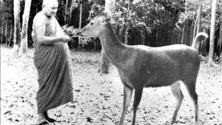 Download Ajahn Chah - The 4 Noble Truths Video