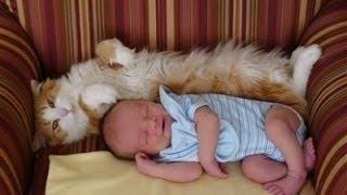 Download Katzen Treffen Neugeborene zum ersten mal Videoerstellung 2014 [NEU HD] Video