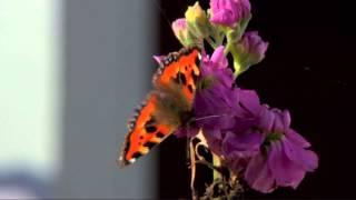 Download Cian garden gmtest Video